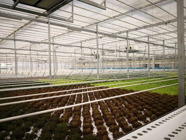 Shandong Vegetable Hydroponics Project